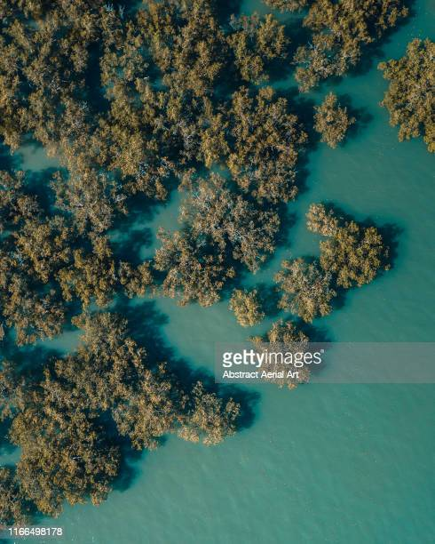 drone image looking down on the edge of the mangroves, darwin, australia - mangrove tree stock pictures, royalty-free photos & images