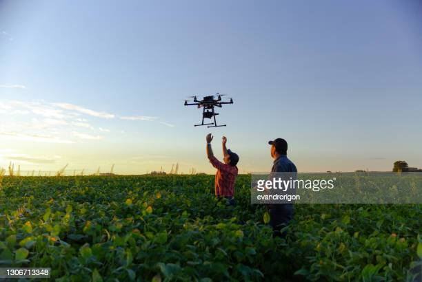 drone in soybean crop. - agriculture stock pictures, royalty-free photos & images
