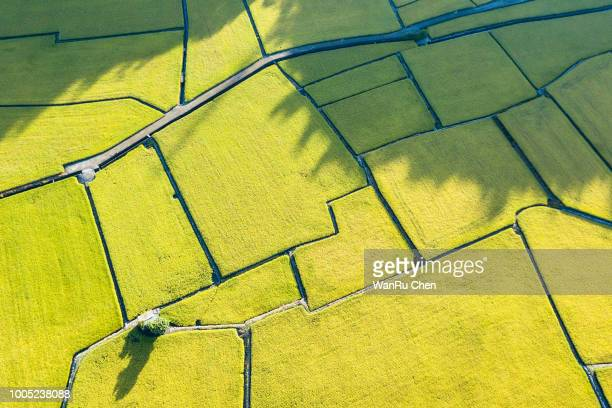 drone is flying above the rice field - remote controlled stock photos and pictures