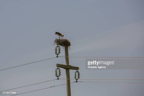 Drone photo shows an aerial view of a stork nest on top of a electric pillar in the Tigris Valley, in Diyarbakir, Turkey on May 18, 2020. The...