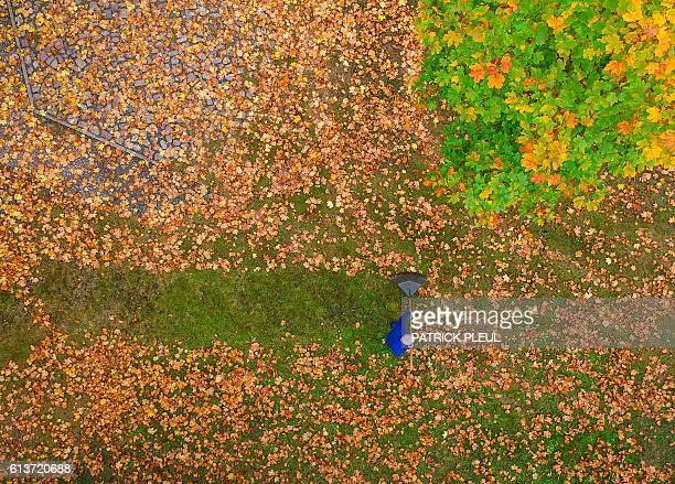 A drone picture shows a man who racks colorful autumn leaves on a meadow under a maple tree in Brandenburg eastern Germany on October 10 2016 / AFP /...