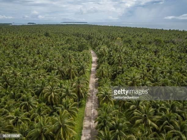Drohne Gesichtspunkt der Palmen und Straße auf den Philippinen