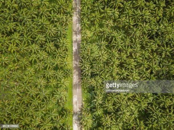punto de vista de drone de palmeras y camino en las filipinas - paisajes de filipinas fotografías e imágenes de stock