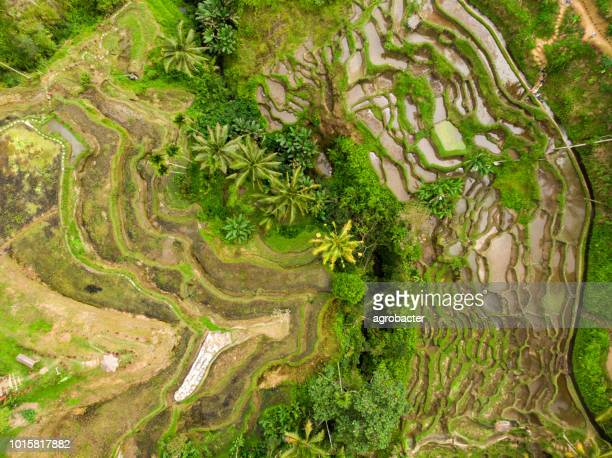 drone point of view of rice terraces and road in ubud, bali, indonesia - tegallalang stock photos and pictures