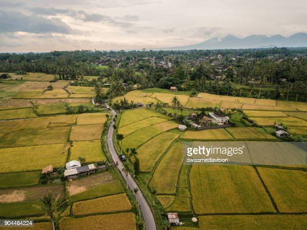 Drone point of view of rice terraces and road in Ubud, Bali, Indonesia