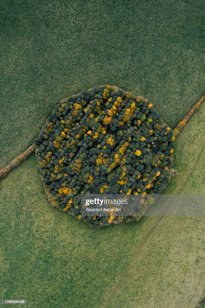 Drone shot above a circular woodland during autumn, England, United Kingdom : Stock Photo