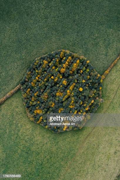 drone shot above a circular woodland during autumn, england, united kingdom - vertical stock pictures, royalty-free photos & images