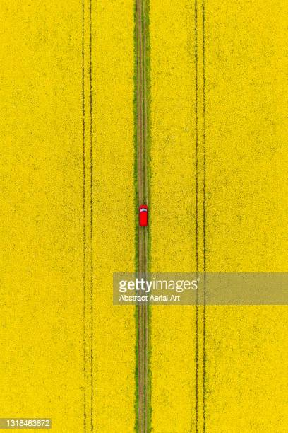 drone shot looking down on a camper van crossing a dirt road between canola fields, england, united kingdom - crucifers stock pictures, royalty-free photos & images