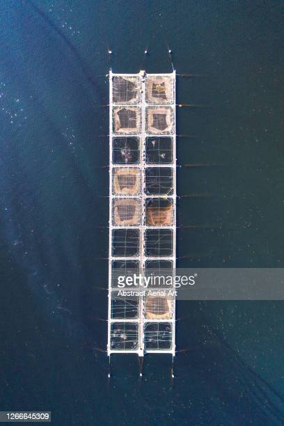 drone shot looking down on a fish farm floating in a loch, scotland, united kingdom - industry stock pictures, royalty-free photos & images