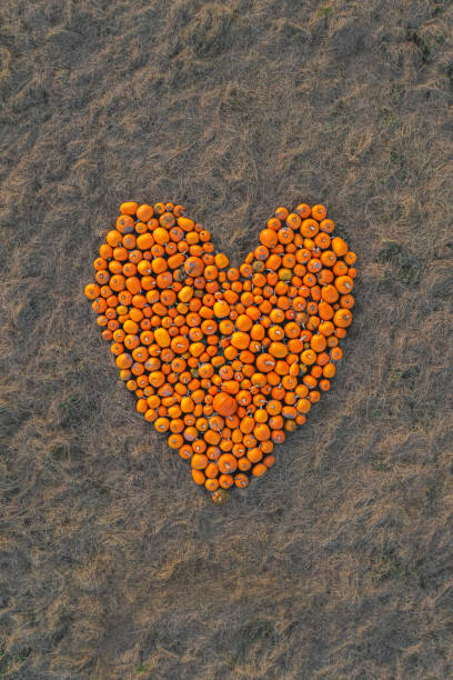 Drone shot looking down on pumpkins shaped in a heart, United Kingdom