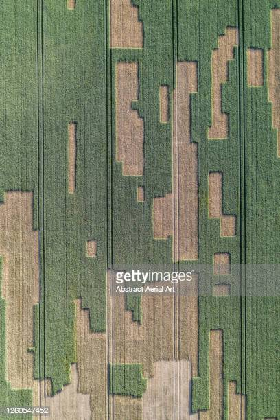 drone shot looking down on unusual patterns in a field, england, united kingdom - vertical stock pictures, royalty-free photos & images