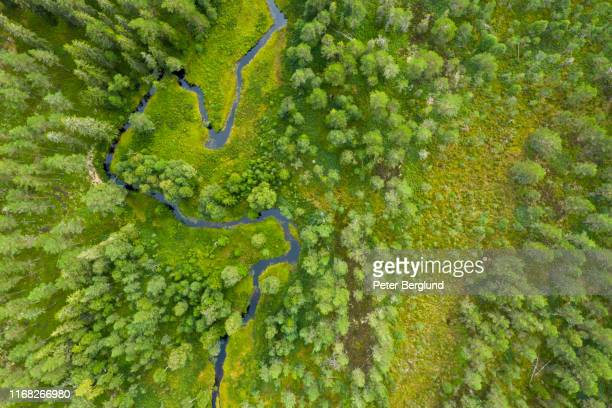 drone shot of a forest with a river - europe stock pictures, royalty-free photos & images