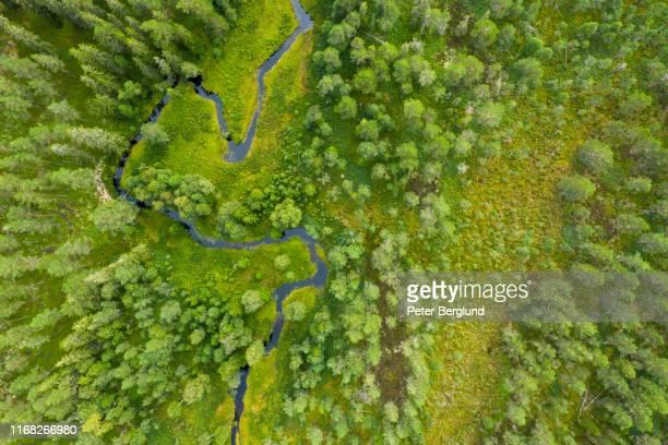 drone shot van een bos met een rivier - europe stockfoto's en -beelden