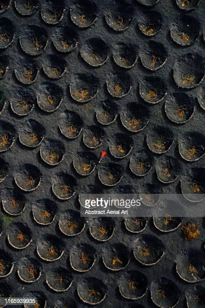 drone shot of person lying in the volcanic vineyards, lanzarote - islas canarias fotografías e imágenes de stock