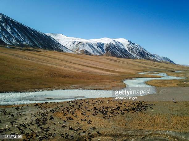 drone shot of sheep herder on horseback herding sheep and yaks near vast braided river valley and majestic snowcapped mountains in distance. - eden pastora fotografías e imágenes de stock