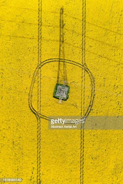 drone shot showing the shadow of an electricity pylon in a rapeseed field seen from directly above, england, united kingdom - crucifers stock pictures, royalty-free photos & images