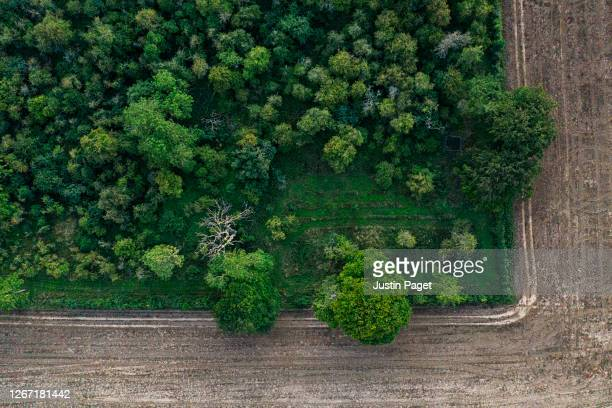drone view directly above woodland - at the edge of stock pictures, royalty-free photos & images