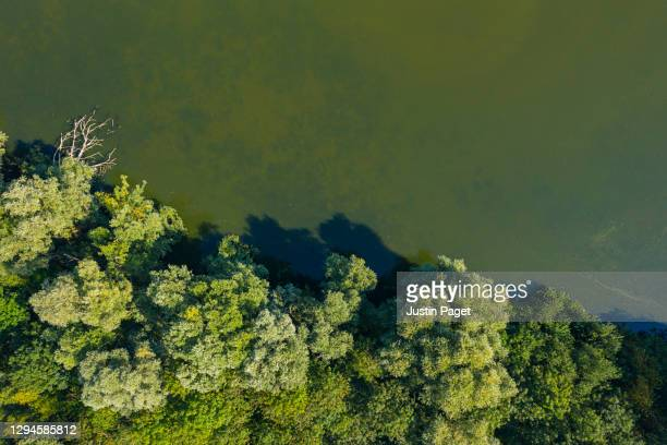 drone view down onto woodland and water - environment stock pictures, royalty-free photos & images