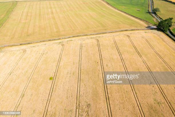 drone view of a cereal crop in a scottish field - johnfscott stock pictures, royalty-free photos & images
