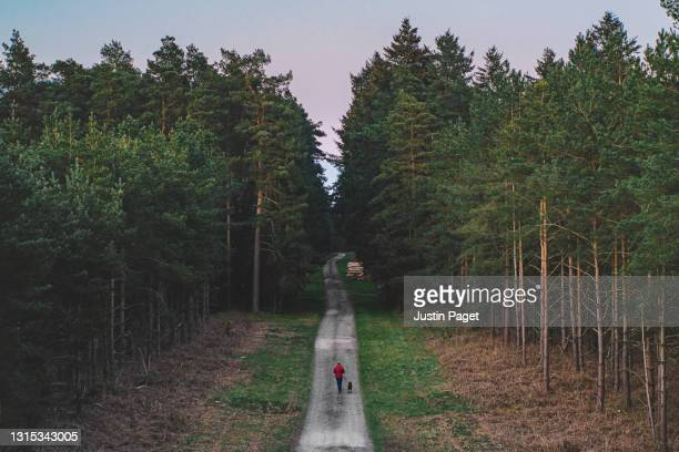 drone view of a man walking his pet dog in the forest - dog walking stock pictures, royalty-free photos & images