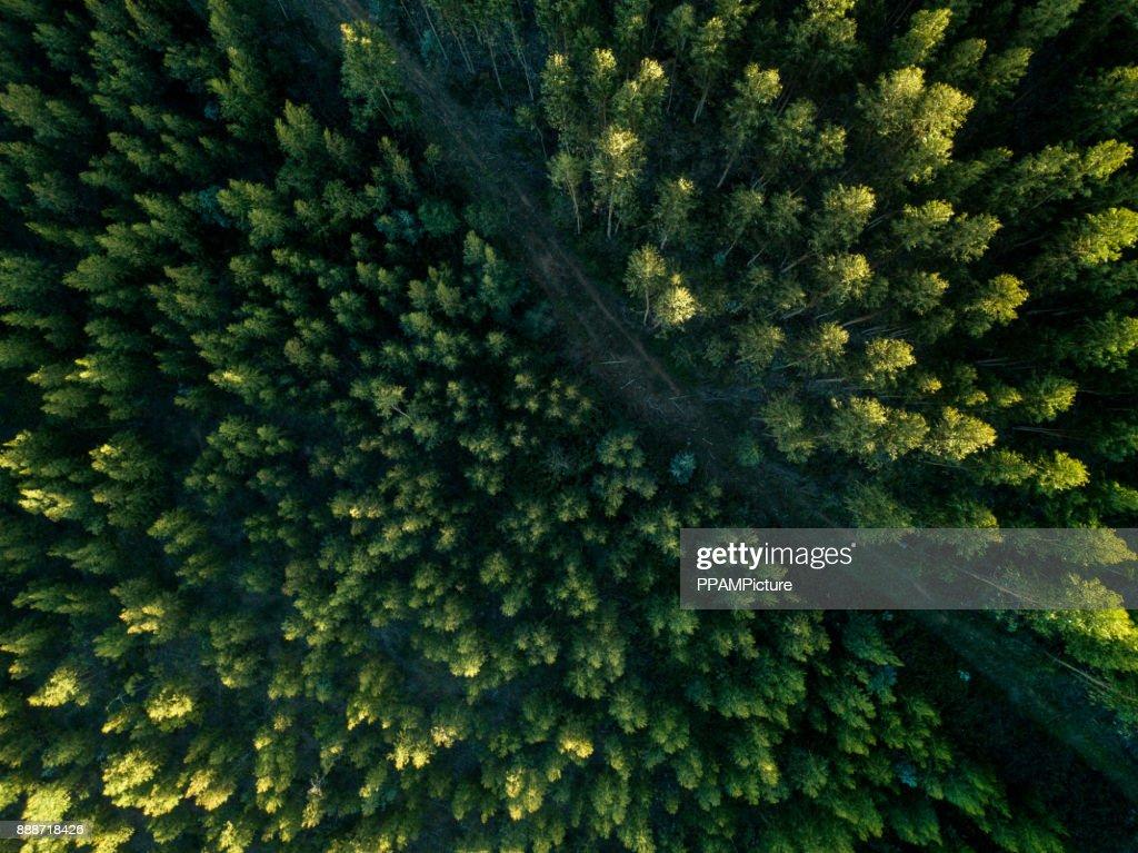 Vista drone di un percorso nella foresta : Foto stock
