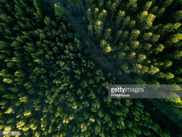drone view of a path in the forest - environmental conservation stock photos and pictures