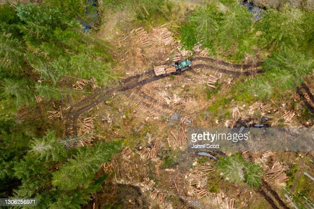 drone view of a working pine forest in scotland - johnfscott stock pictures, royalty-free photos & images