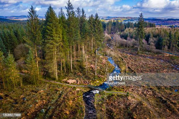 drone view of forest in scotland after felling - johnfscott stock pictures, royalty-free photos & images