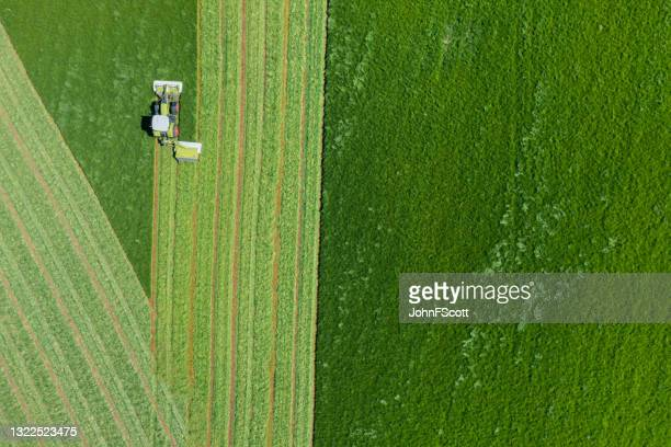 drone view of grass being cut for silage - johnfscott stock pictures, royalty-free photos & images