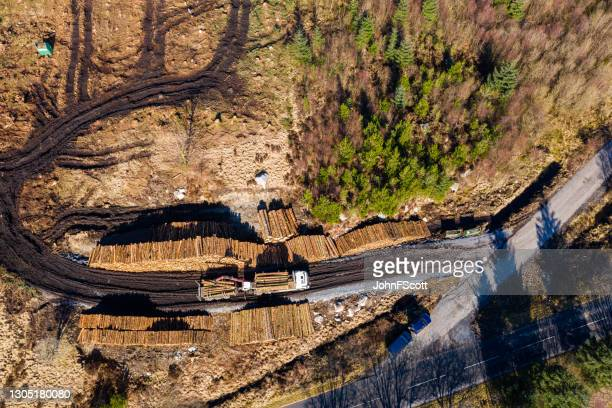 drone view of loading a truck with timber - johnfscott stock pictures, royalty-free photos & images