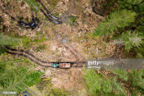 drone view of newly felled trees being collected - johnfscott stock pictures, royalty-free photos & images