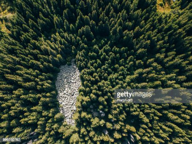 drone view of pine forest - wildlife reserve stock pictures, royalty-free photos & images