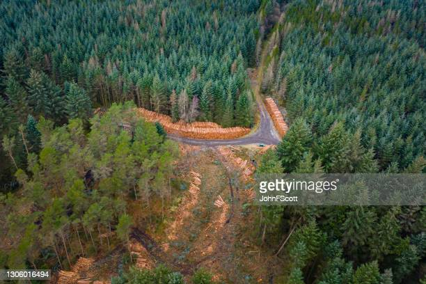 drone view of pine forest ready for harvest - johnfscott stock pictures, royalty-free photos & images