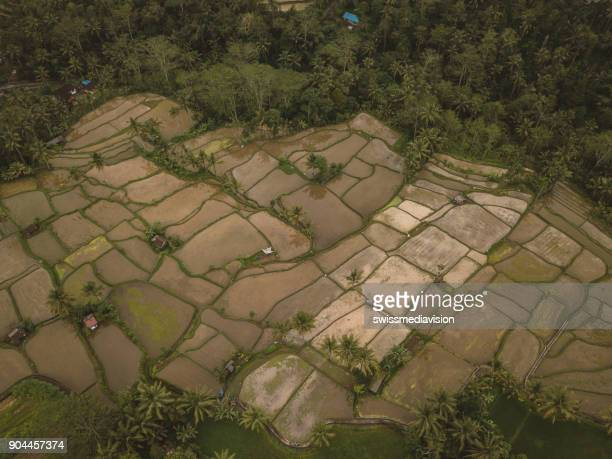 Drone view of rice terraces in Ubud, reflection on water, Bali, Indonesia