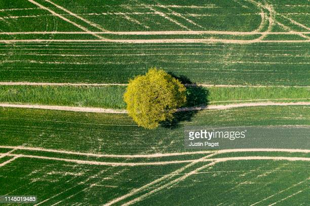 drone view of tree in field - cultivated land stock pictures, royalty-free photos & images
