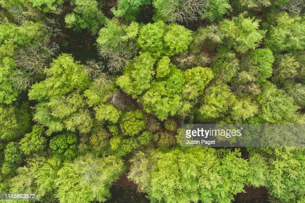drone view of woodland - woodland stock pictures, royalty-free photos & images