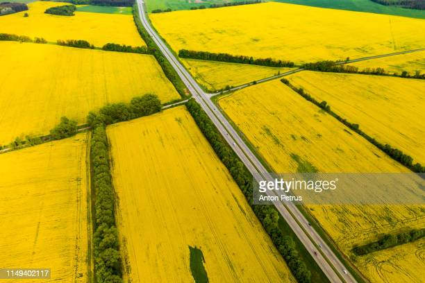 drone view of yellow rapeseed fields at sunset - キャノーラ ストックフォトと画像