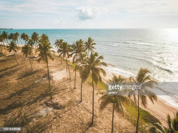 drone view on coastline with palm beach in bahia, brazil - brazil stock pictures, royalty-free photos & images
