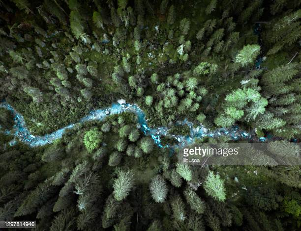 drone view on the italian alps - pine woodland stock pictures, royalty-free photos & images