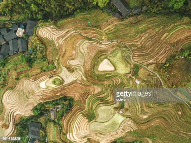 drohne-blick auf die reisfelder terrasse longsheng - terrassenfeld stock-fotos und bilder