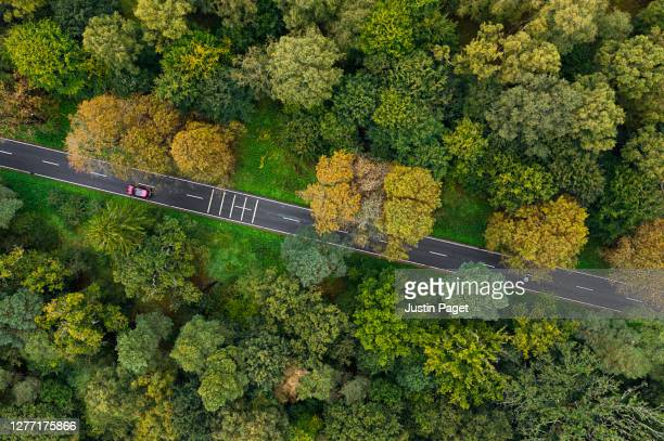 drone view over a road through a forest - drone point of view stock pictures, royalty-free photos & images