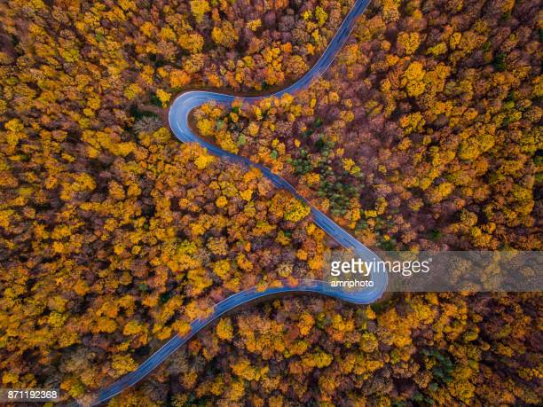 Drones: An Aerial Road Trip - autumn forest with curved road