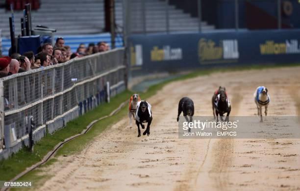 Droopys Ed Moses Zenas Elena Islas Scolari Jaytee Hellcat Hipower Rhino and Britania Ardbeg in action during the William Hill Greyhound Derby 2nd...