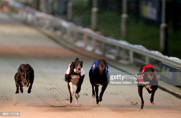 Droopys Expert wins the All England Cup Final Race ten during the William Hill All England Cup Festival at Newcastle Greyhound Stadium PRESS...
