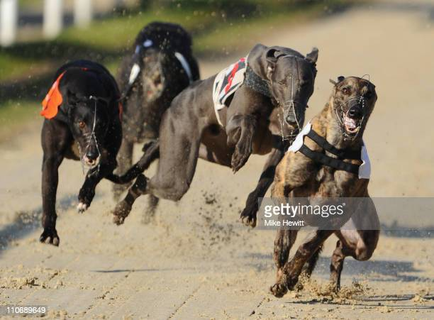 Droopys Scarlett and Clonlusk Tara collide in the 4th race at the Brighton and Hove Greyhound Stadium on March 23 2011 in Brighton England