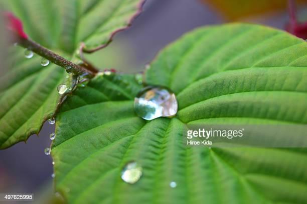 Drop and leaf