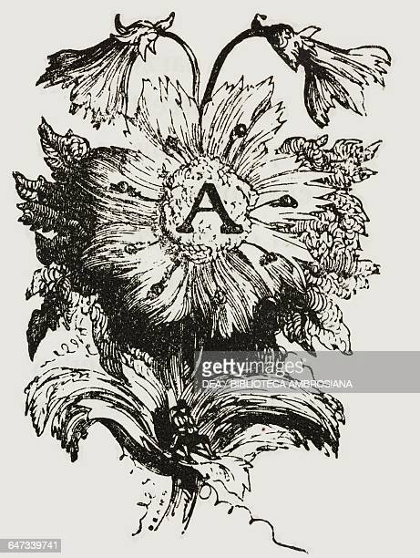Drop cap letter A in the form of flower illustration from Chapter One Part II A Voyage to Brobdingnag from Gulliver's travels into several remote...