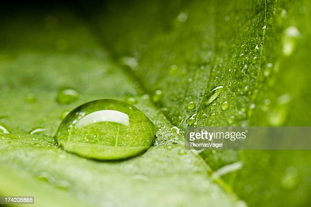 Drop on Leaf - Green Nature Water Environment