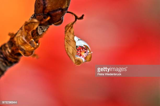 drop with reflection (tropfen mit spiegelung ) - spiegelung stock pictures, royalty-free photos & images