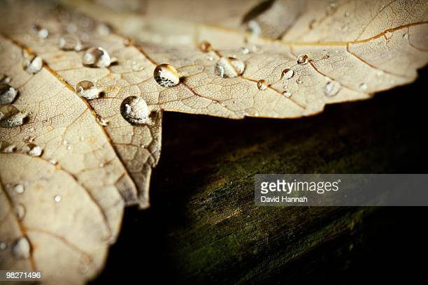 droplets - 2000 2009 stock pictures, royalty-free photos & images